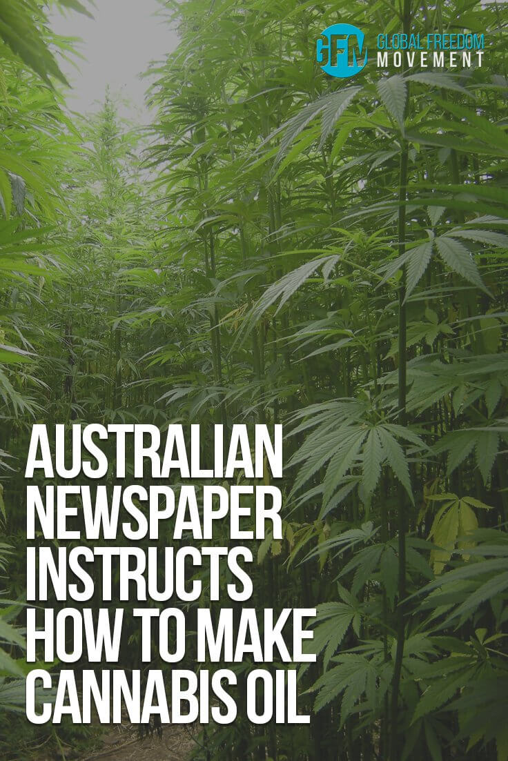 Australian Newspaper Instructs How To Make Cannabis Oil