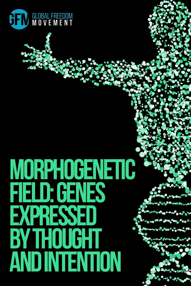 Morphogenetic Field: Genes Expressed By Thought And Intention