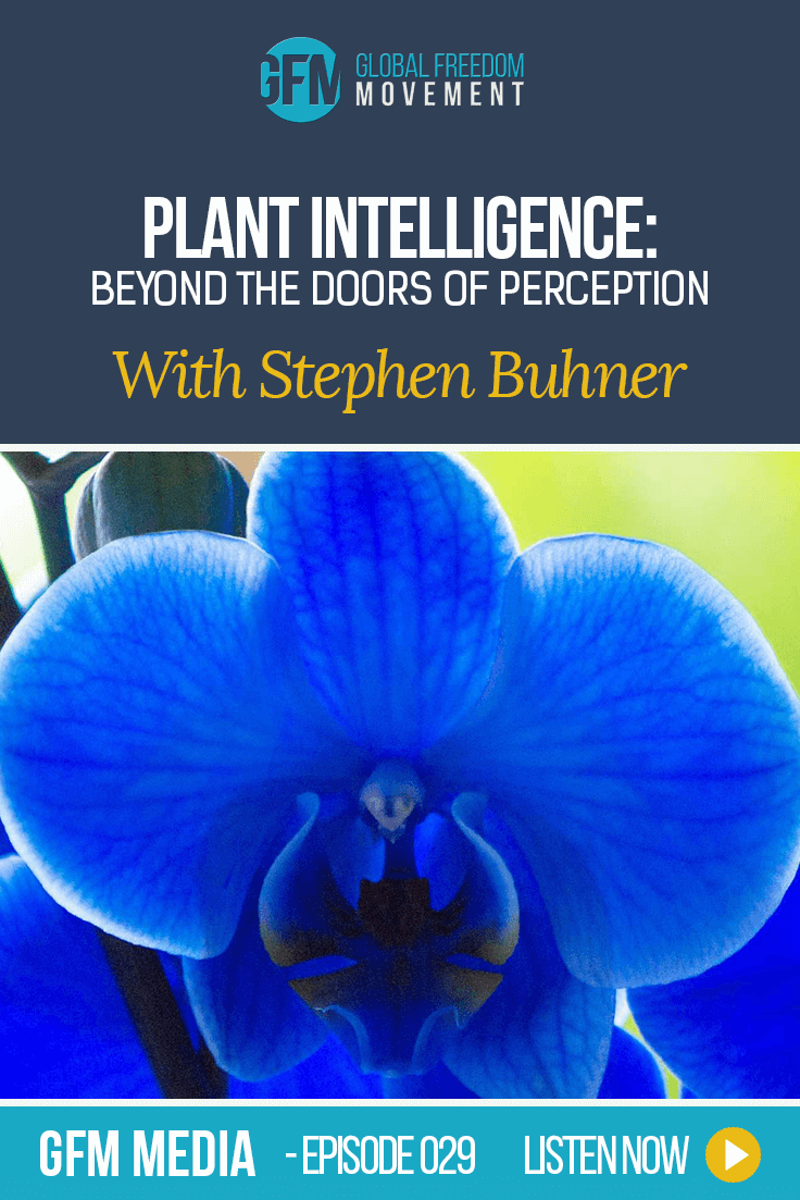 Plant Intelligence: Beyond The Doors Of Perception With Stephen Buhner (Episode 29, GFM Radio)