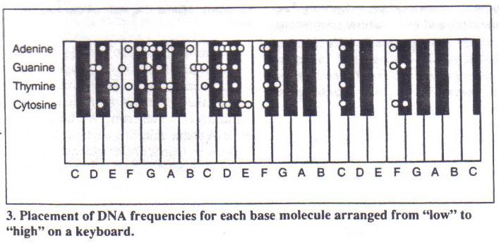432 DNA